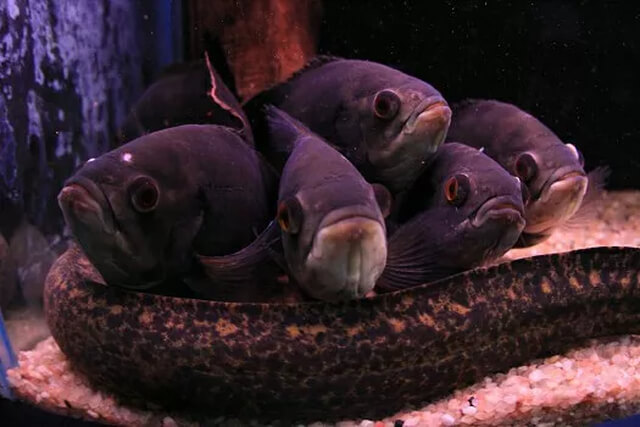 aqua-rio-de-bonito-11-1