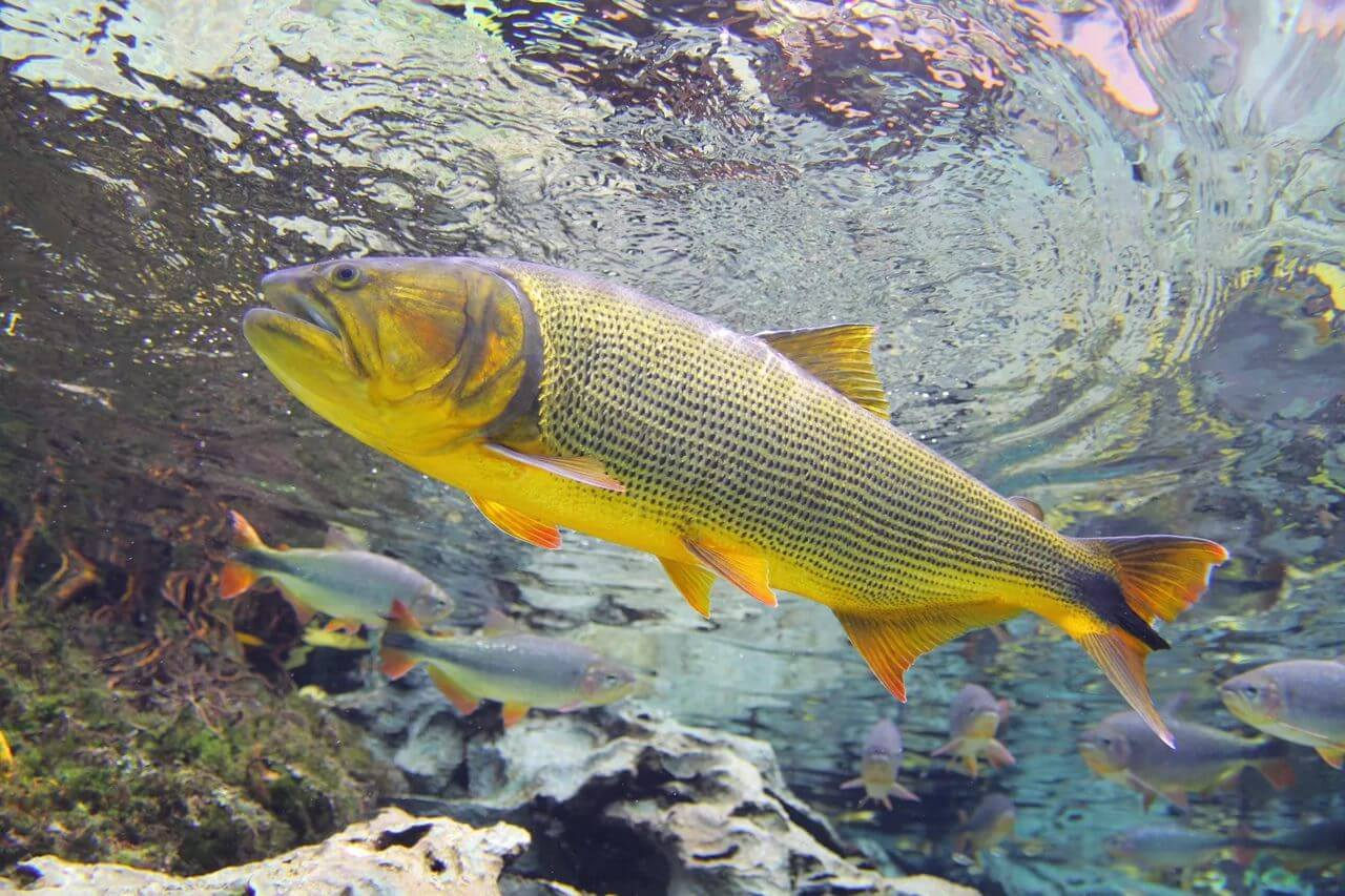 aquario-natural-1