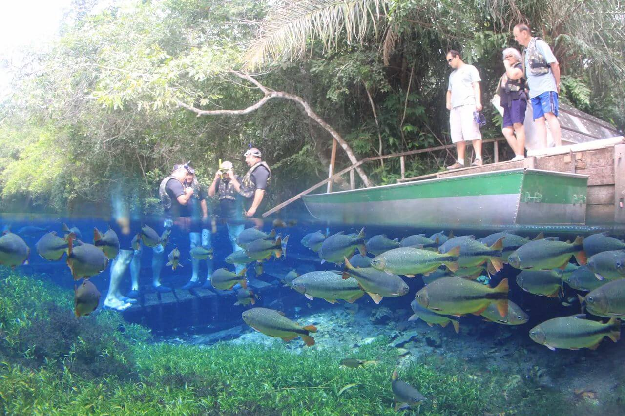 aquario-natural-2