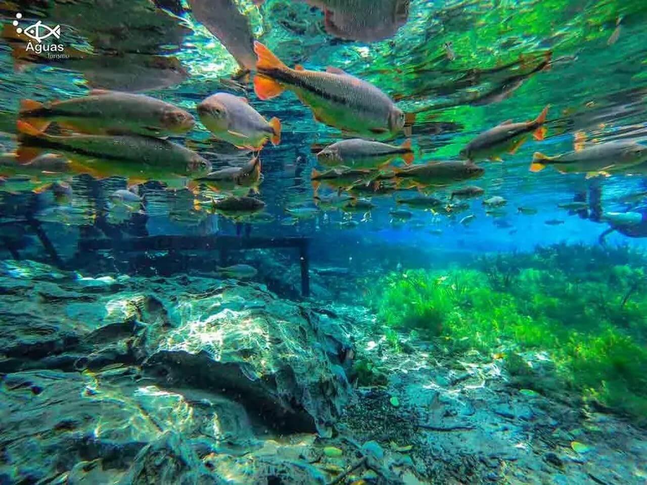 aquario-natural-4