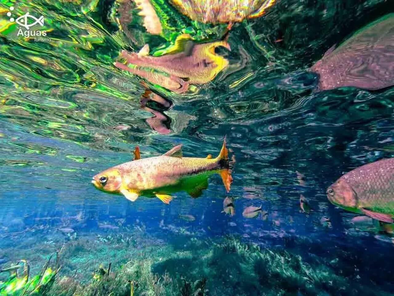 aquario-natural-5