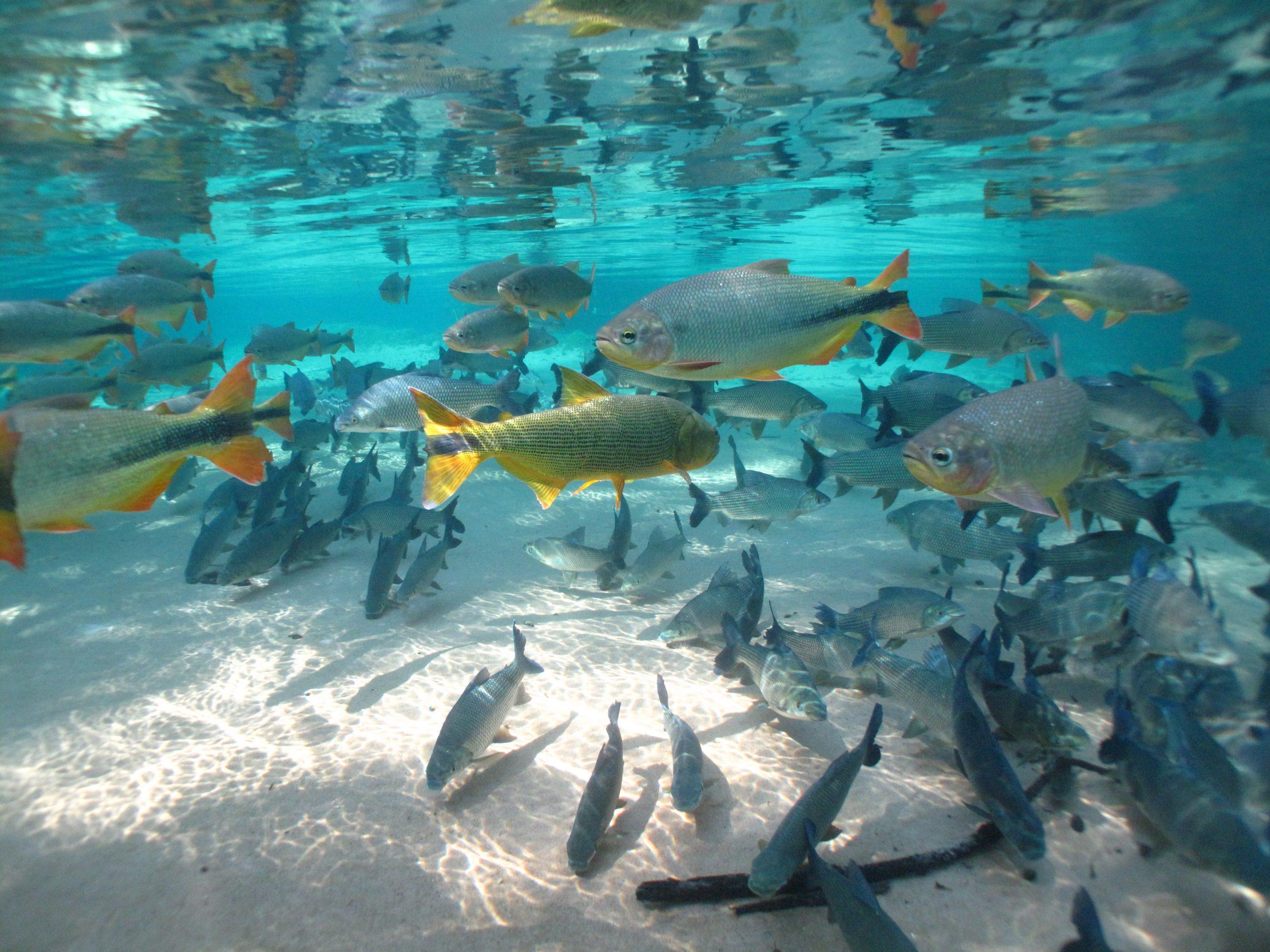 Cardume_de_peixes_-_Fish_shoal_-_André_Turatti